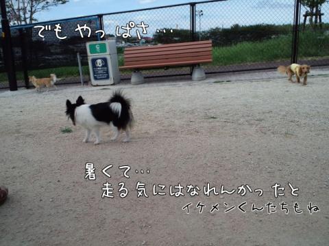 doV_2.jpg
