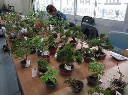 bonsai-3.jpg