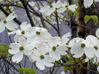 hanamizuki0686_20100505132818.jpg