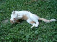 だれきった猫2