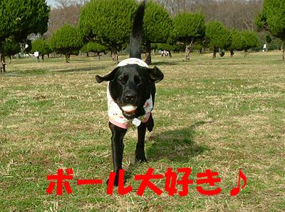 0303秋が瀬8