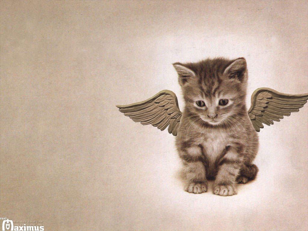 Cat-Wallpaper-cats-636603_1024_768.jpg