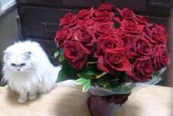 薔薇と雪120312