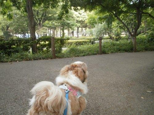 早朝の横浜公園