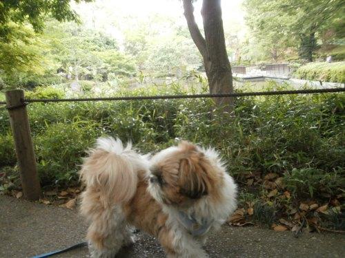 早朝の横浜公園2