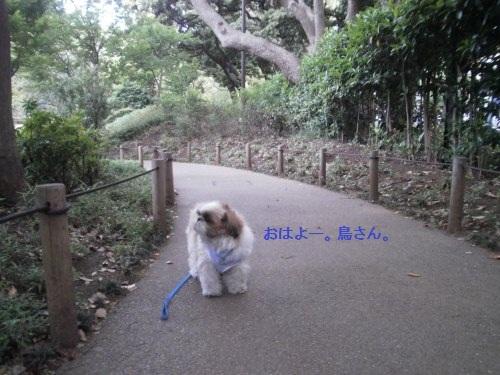 早朝の横浜公園3