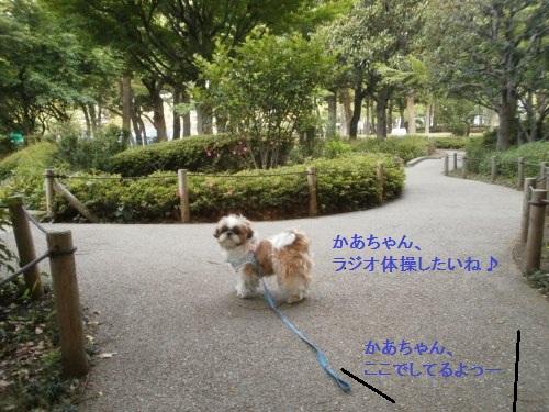 早朝の横浜公園4