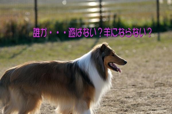 2014011106_convert_20140112230858.jpg