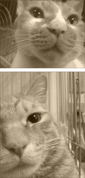cat25.jpg