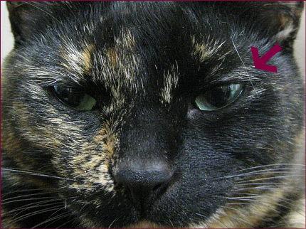 猫 人気ブログ