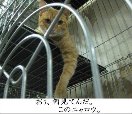 オラオラ猫