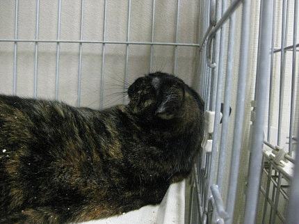cat45.jpg