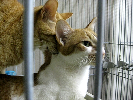 cat56.jpg