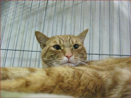 cat60_20100621190109.jpg