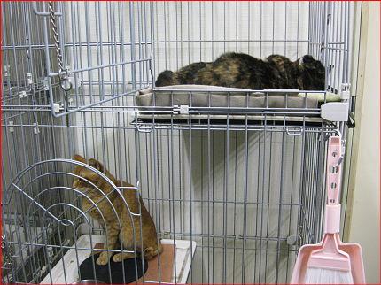 cat61.jpg