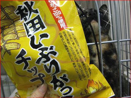 cat62.jpg