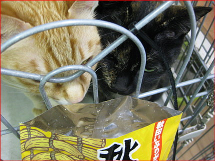 cat63.jpg