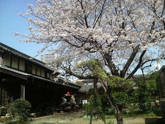 古民家と桜1