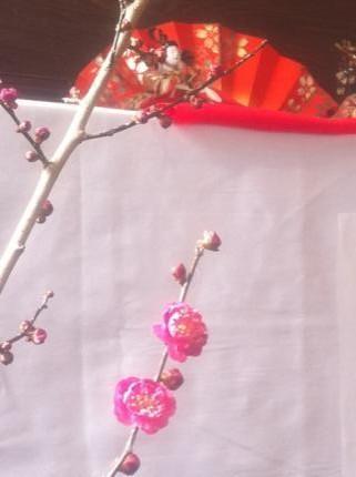 梅の花とお雛様_convert_20110208163217_convert_20110209164928_convert_20110209165100