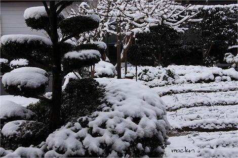 小庭の雪景色