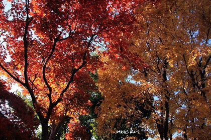 IMG_67361_20121129152503.jpg
