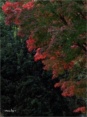 紅葉&緑葉