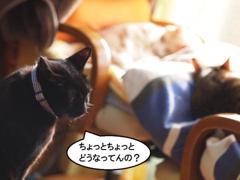 きなっちゃん社長&ダンシーズ