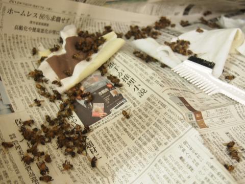 死に掛けの蜂の群れ