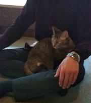 猫カフェ01b