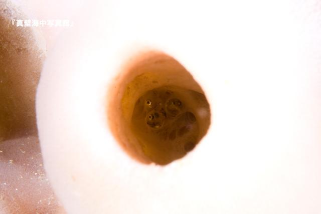 24-1★アナハゼの卵110130_1-01