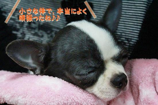 ぽてあ避妊手術 (8)