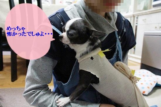 ぽてあ避妊手術 (7)