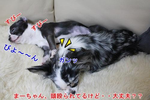 まか&ぽて♪ (6)