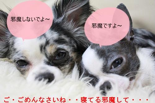 まか&ぽて♪ (5)