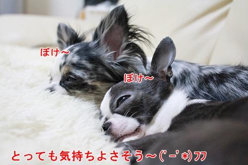 まか&ぽて♪ (4)