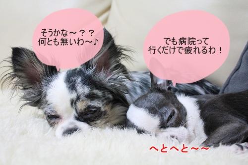 まか&ぽて♪ (2)