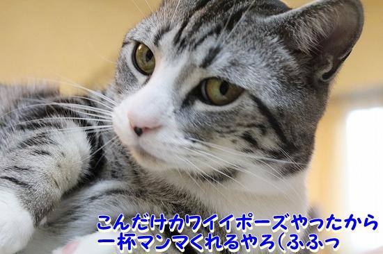 花円キャロ  (5)