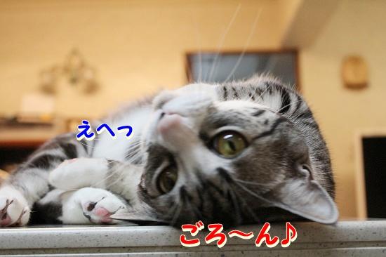 花円キャロ  (4)