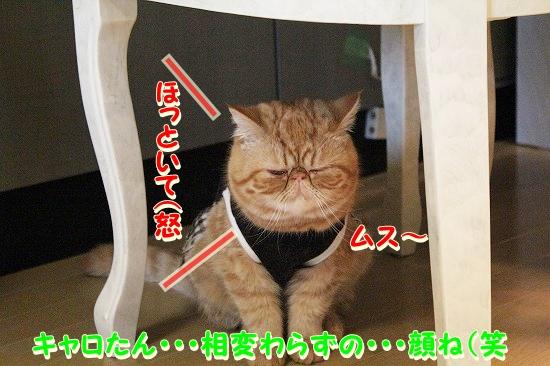 花円キャロ  (2)