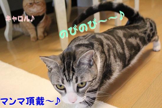 花円キャロ  (1)