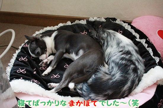 まかぽて♪ (6)