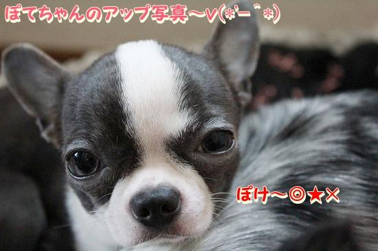 まかぽて♪ (4)
