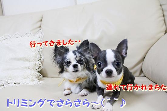 トリミング♪ (1)