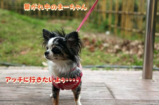 まかぽて旅行♪ (6)