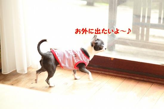 コテージに到着♪ (3)