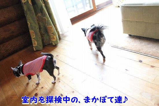 コテージに到着♪ (15)