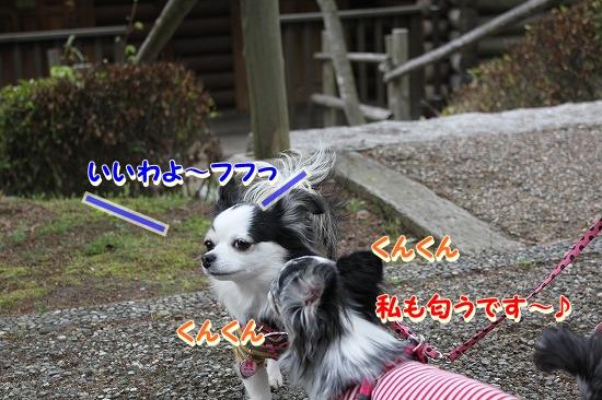 かりんちゃん♪  (6)