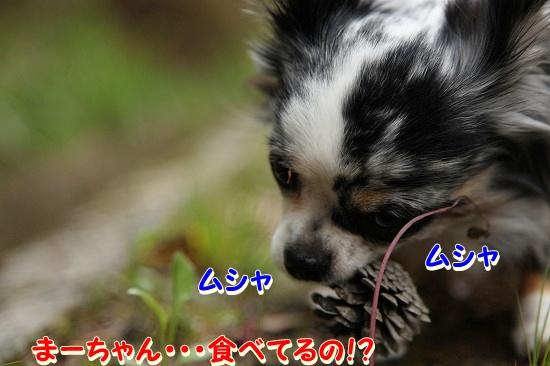 最終日♪ (5)
