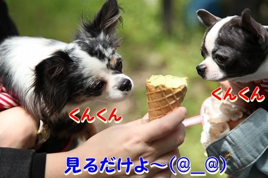 最終日♪ (31)