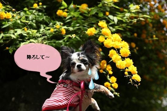 最終日♪ (29)
